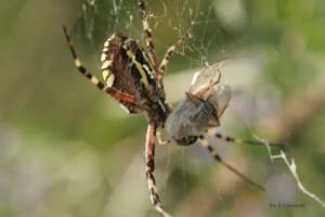 fauna_20110222_1103438358
